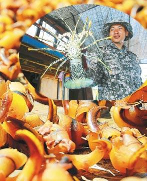 西沙群岛美味:舌尖上的诱惑