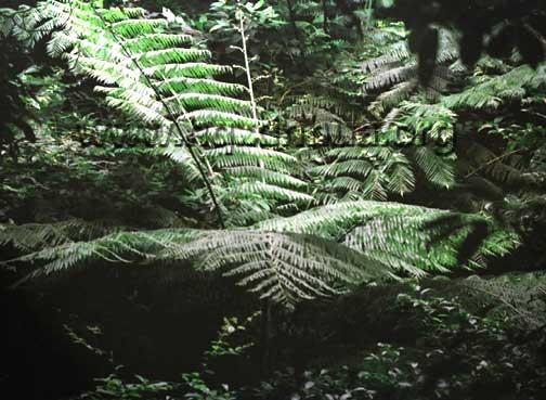 海南岛热带雨林_神秘的热带雨林(组图)