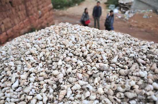 探访云南通海兴义4000年贝丘遗址