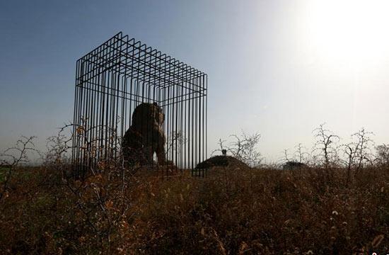 """为防盗 咸阳唐贞陵两尊石狮被""""关""""铁笼"""