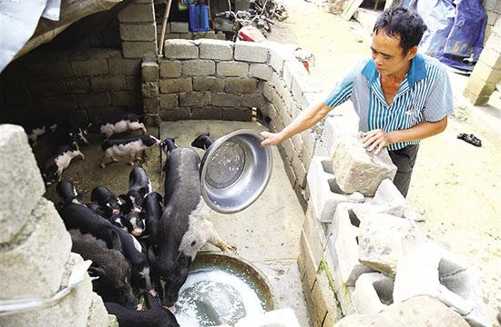 白沙:养猪致富