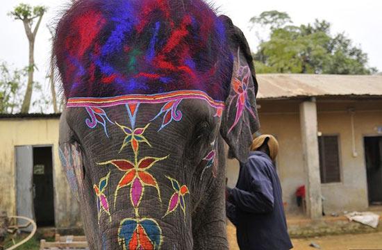 图片直击尼泊尔大象选美比赛:画花纹涂指甲