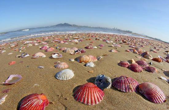 山东烟台风浪过后彩色贝壳铺满海滩