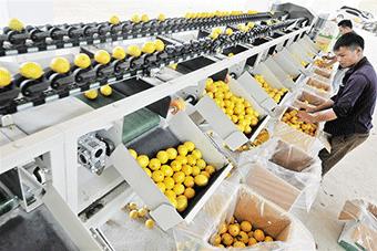 萬寧農戶引進以色列設備加工檸檬