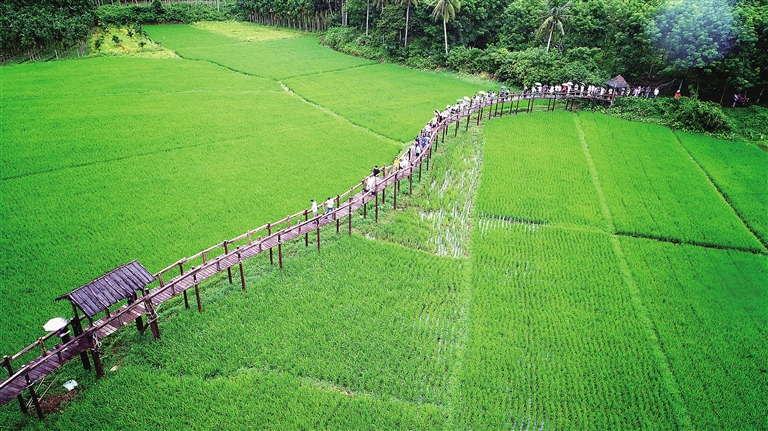 海南省人大常委會:為綠水青山築起法制屏障