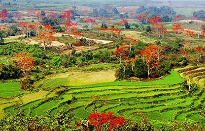 昌江寶山村:中國少數民族特色村寨