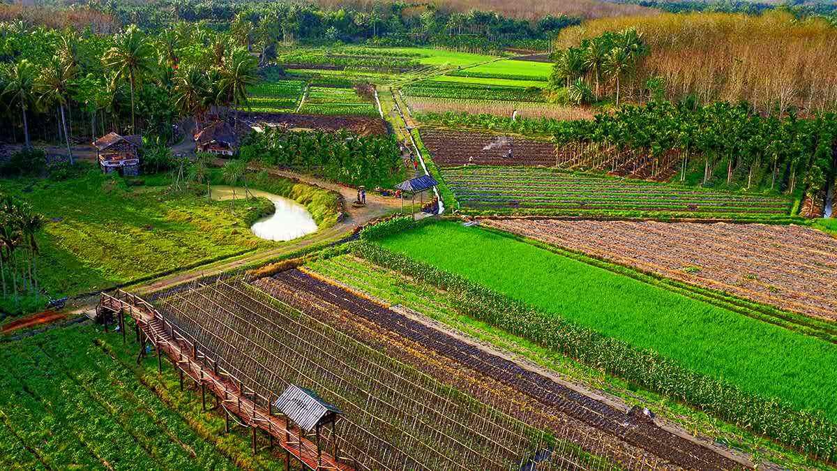 海南发展乡村旅游休闲产业 应当注意三个方面图片