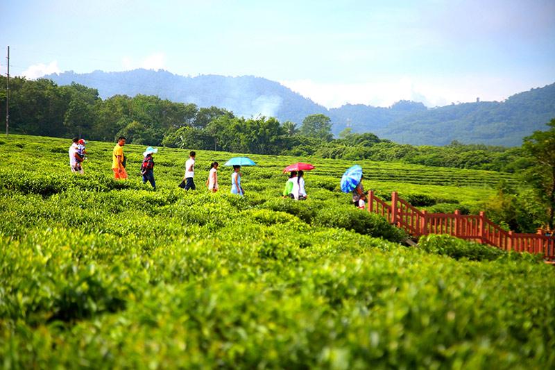 10月1日,海南省白沙黎族自治县重点项目原生态茶园小镇正式对外开园.