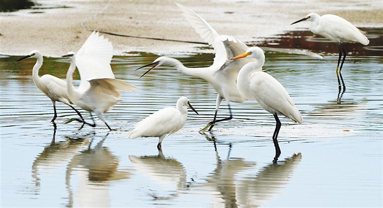 樂東鶯歌海鹽場濕地共記錄到野生鳥類82種
