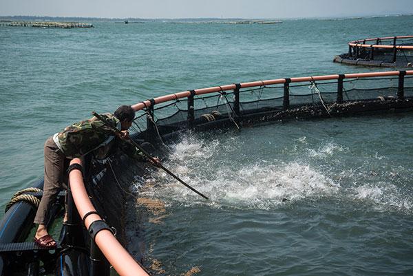 90秒鎖定亞洲最大規模深水網箱養殖基地