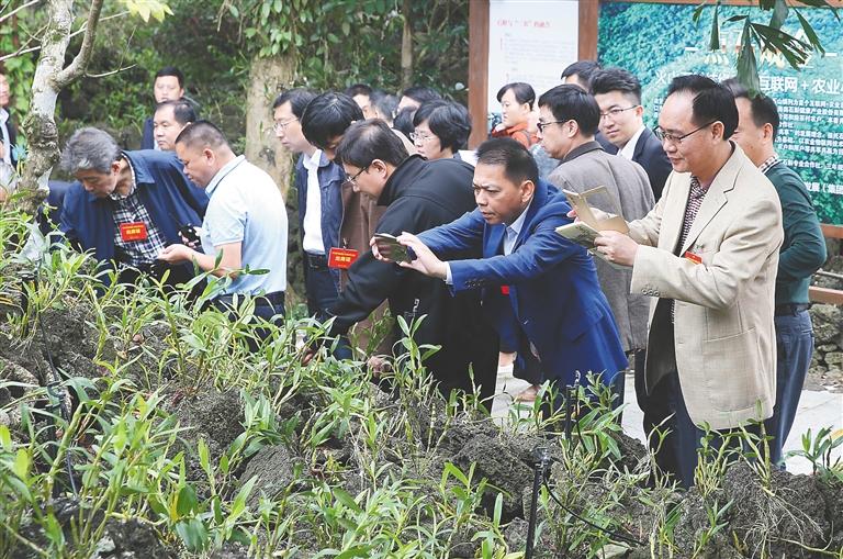 創建文明生態村交流會代表考察海口文明生態村