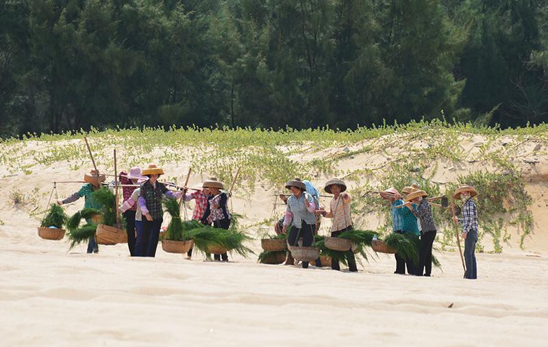 沙丘娘子陶鳳交:綠色海防長城背後的26年堅守