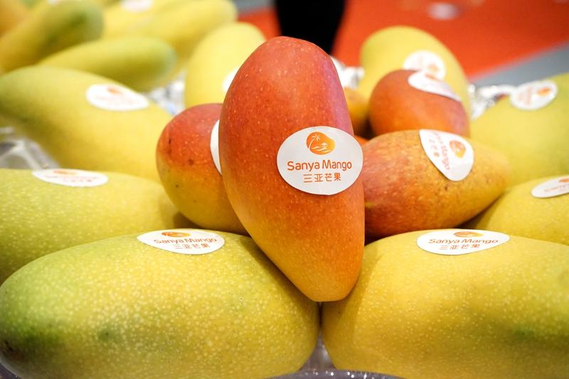 三亞國際芒果産業大會開幕 80余家展商現場對接