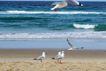 三亚:2018海洋环保公益活动放生近万海洋生物