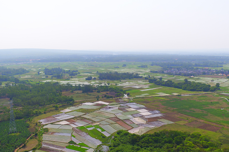 农民话农品——儋州香芋