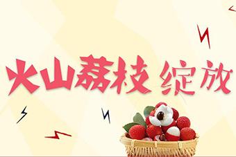 火山荔枝 绽放芳华——2018海口荔枝月活动