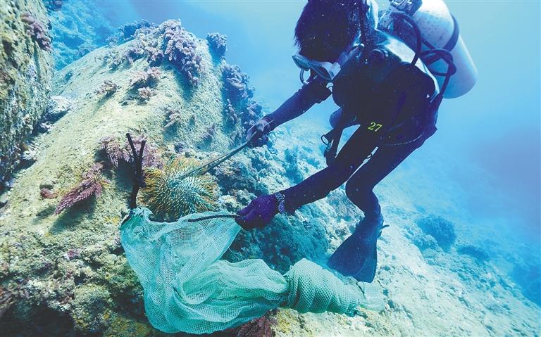打捞棘冠海星 保护海底生态