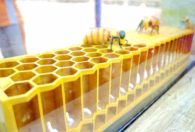 蜜蜂文化与蜜蜂知识少儿科普活动走进琼中