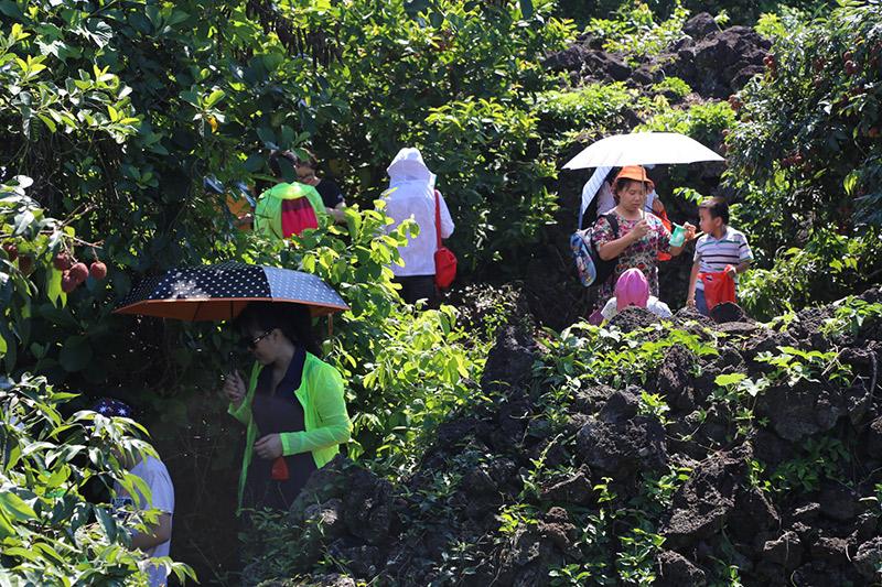 荔枝熟啦!新華網親子採摘團走進海口永興、三門坡