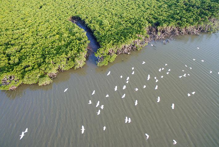 航拍海南东寨港红树林保护区 人与自然和谐相处
