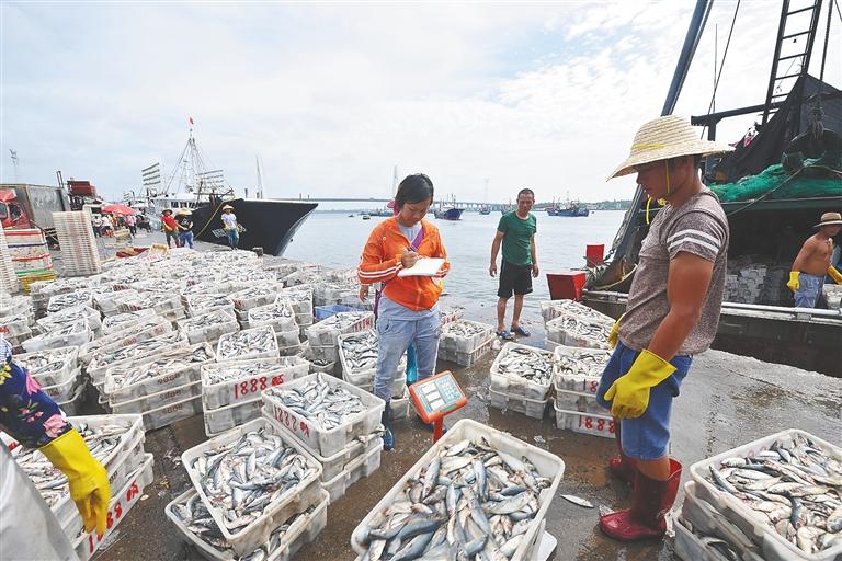 文昌:漁貨豐收供市場