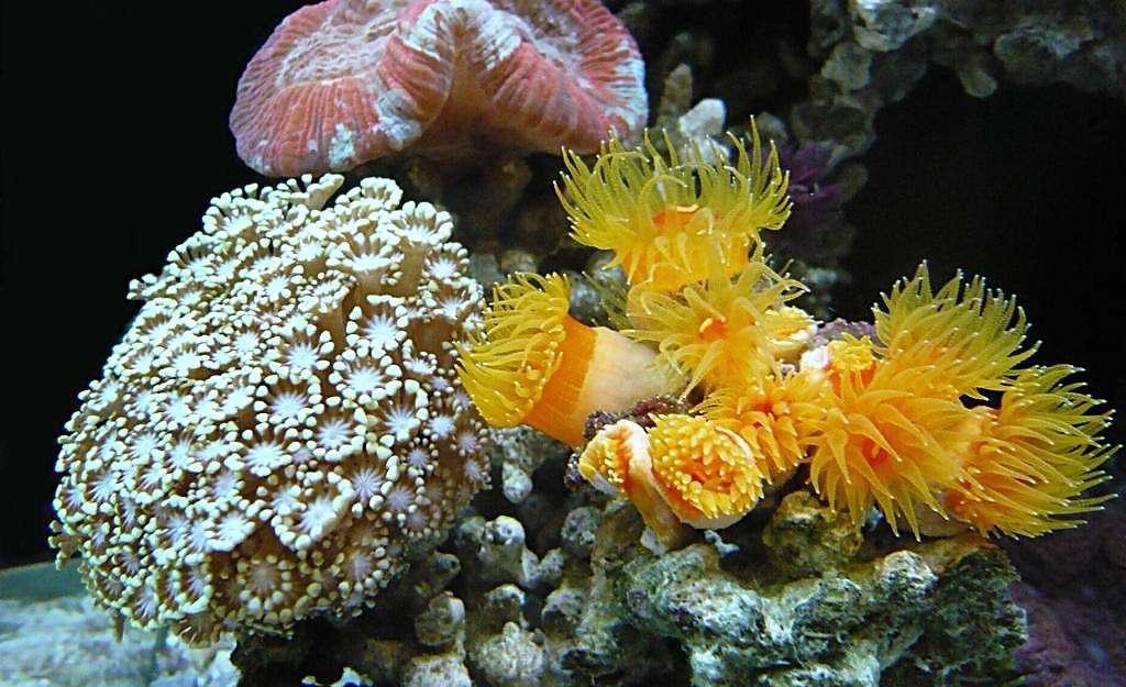 三亞珊瑚培育與修復試驗取得階段性成果