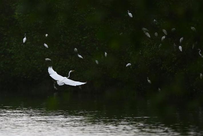 白鷺飛飛點碧塘