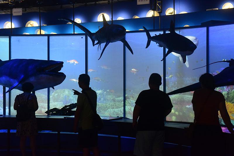 博物館裏探尋海洋奧秘