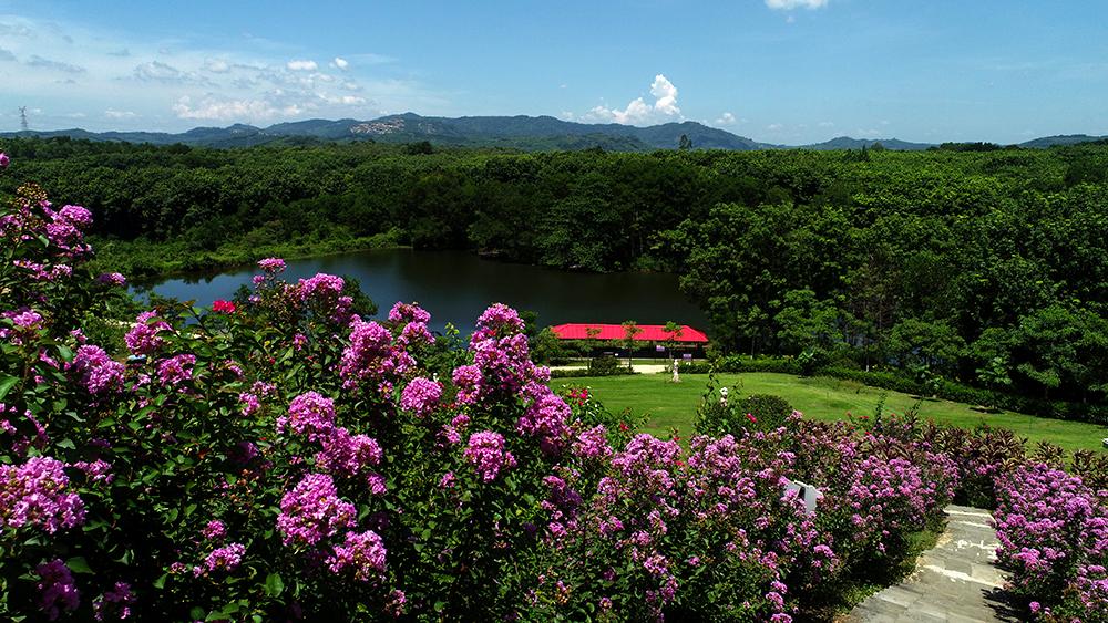 瞰海南——香氣縈繞的山
