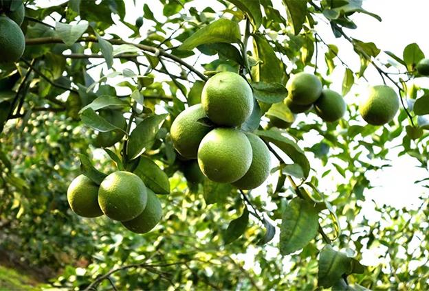 宋聖根:向生態循環農業要效益 推動三産融合發展
