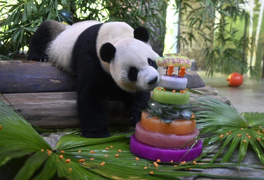 """大熊貓兄弟的""""生日派對"""""""