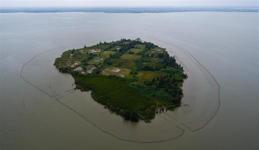 東寨港國家級自然保護區紅樹林面積擴大至1771公頃