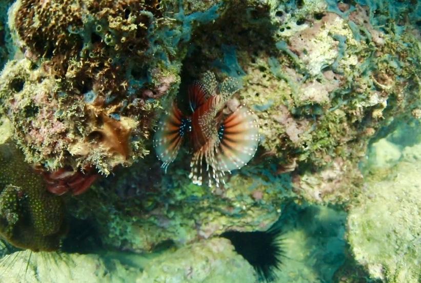 海南五彩斑斕的海底世界