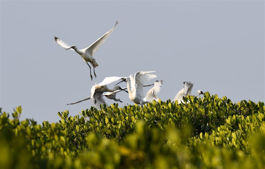 海南:候鳥濕地享暖冬