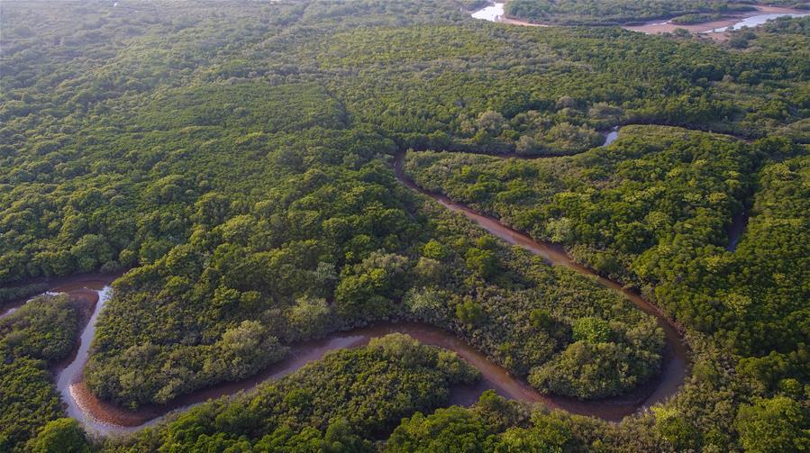 海南將加強紅樹林保護修復