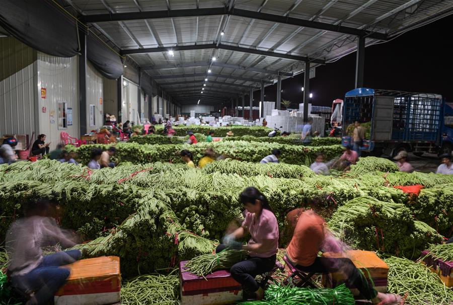 海南冬季瓜菜進入上市旺季