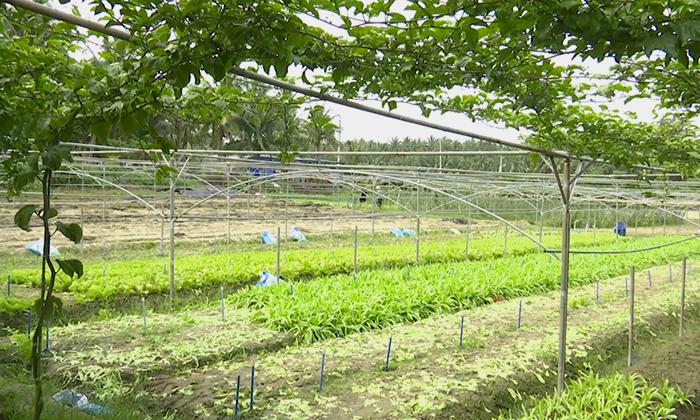 復耕撂荒地助農增收