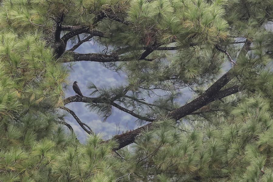 海南熱帶雨林國家公園:打造自貿港生態名片