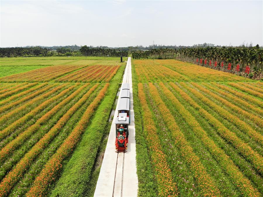 海南瓊海:農旅結合助推鄉村振興