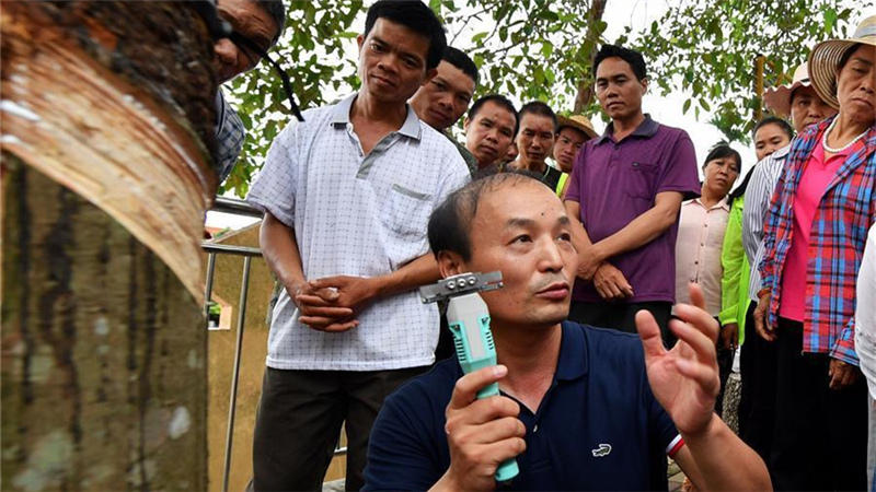 海南瓊中:發放電動割膠刀 助農民提高割膠效率