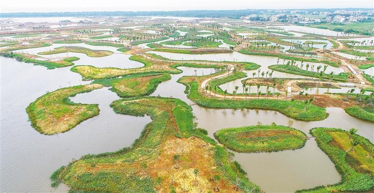 江東新區生態修復項目計劃年底完工