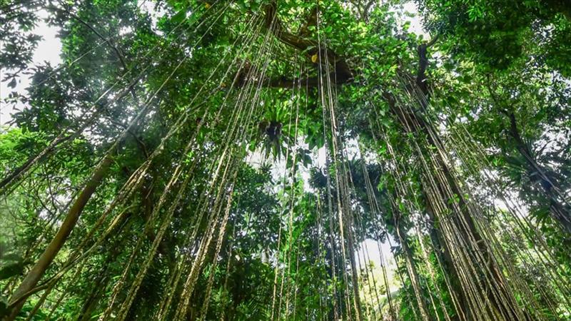 海南熱帶雨林國家公園發布形象標識