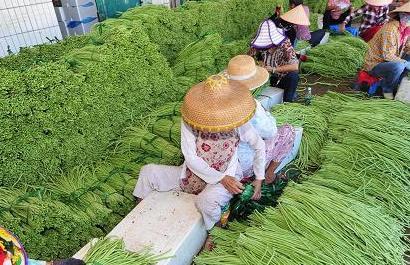冬季瓜菜開始上市 部分品種收購價格創歷史新高
