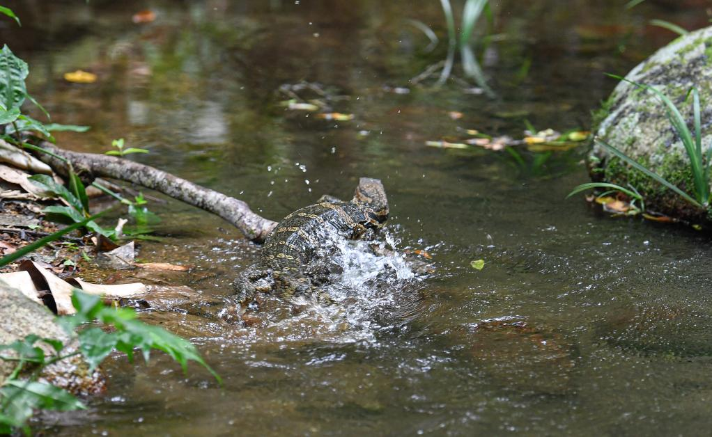 海南:放歸國家重點保護野生動物