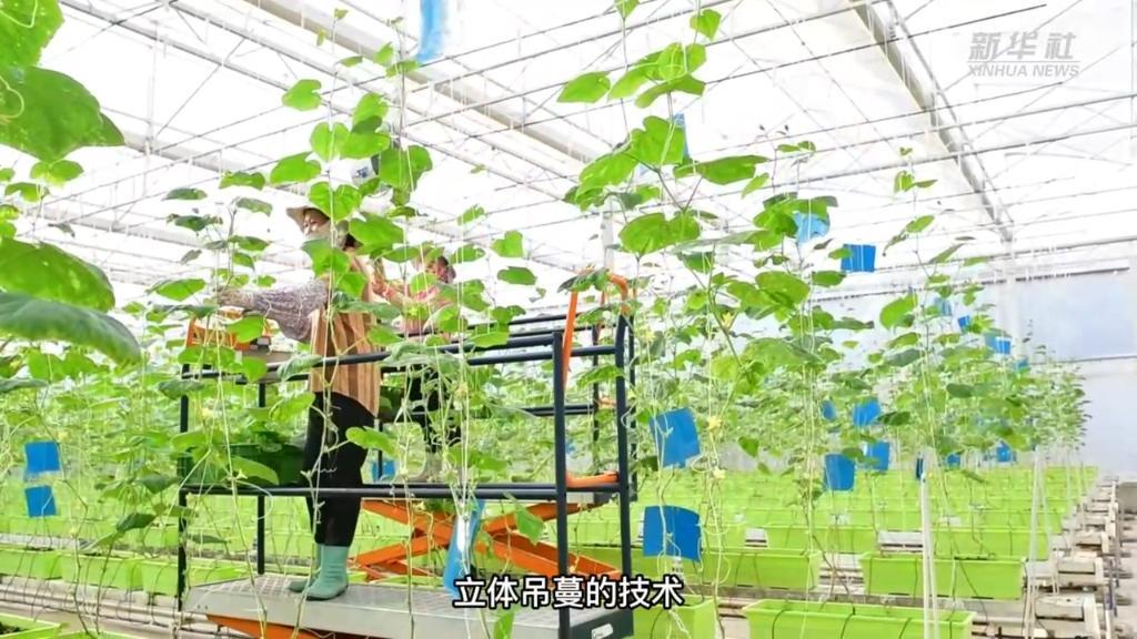 海南陵水:科技助力現代農業發展