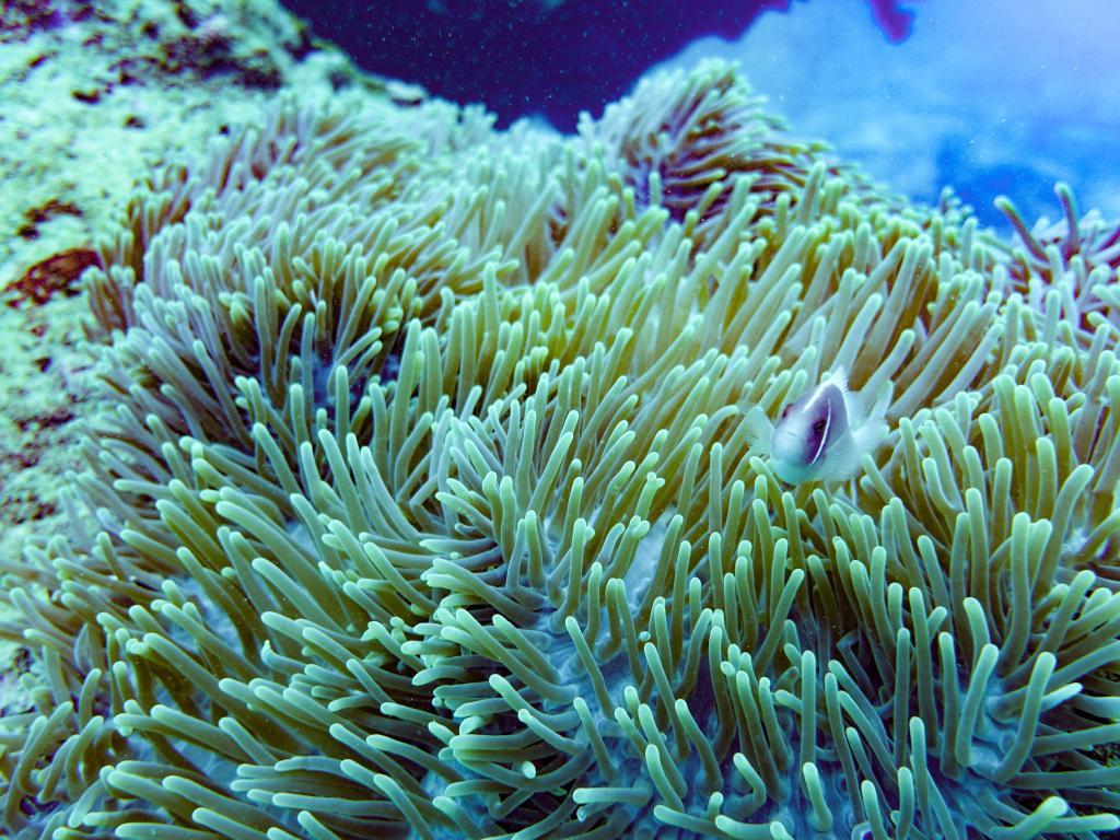 海南三亞:豐富多彩的海洋世界